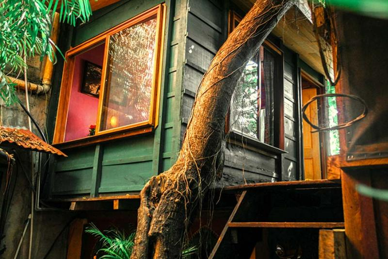 Cabin Jungle Room - 1 to 2 pers.